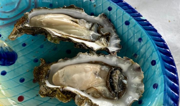 Grote oesters rechtstreeks van het Wad